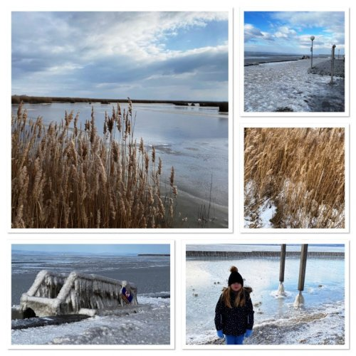 Winter am Neusiedlersee