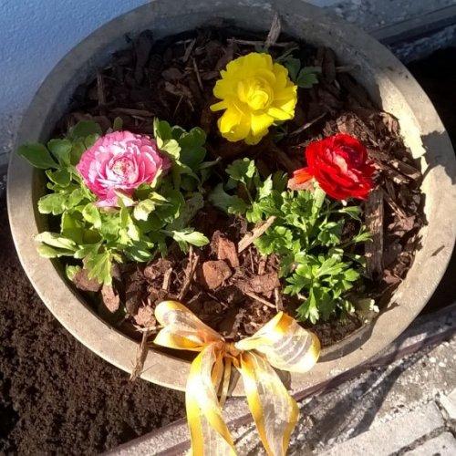 Frühlingsblumen - herrlich!